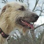 'Earthdog' Eco-Friendly Hemp Dog Accessories