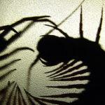 Safe Green Pest Control Methods for Winter