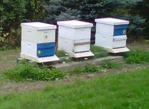 Patricks Bee Boxes