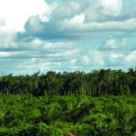 Palm Oils: Nutrition vs the Environment